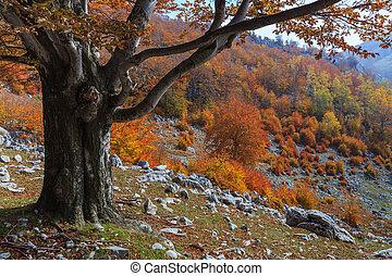 autumn landscape in The Mehedinti Mountains, Romania