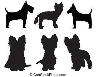 klein, hund, silhouetten, (Yorkshire, terrier, Schnauzer)