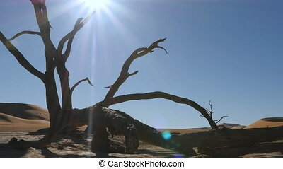 desert dead tree dead vlei dolly - tracking shot of desert...