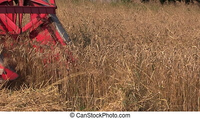 harvester cut wheat plant