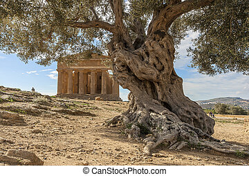 Agrigento - Valle dei templi - Agrigento - Temples valley A...