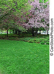 Beauitful spring trees and grass in park