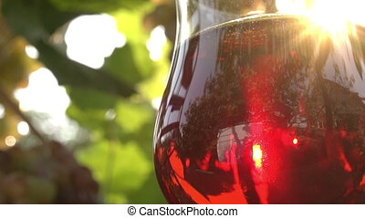 Glass of Red Wine - Glass of red wine with bright standing...