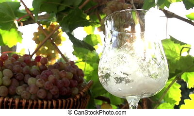Sparkling Wine in the Sun - Sparkling Wine is poured into a...