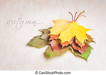 Autumn nature concept. Fall fruit and vegetables on wood....