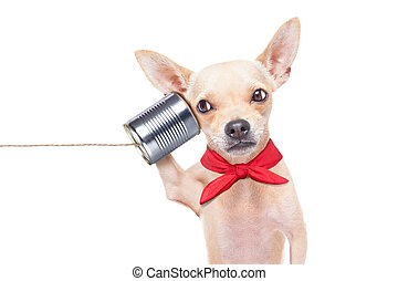 dog on the phone - chihuahua dog talking on the phone...