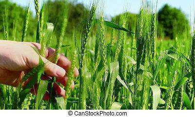 Farmer near the field episode 4