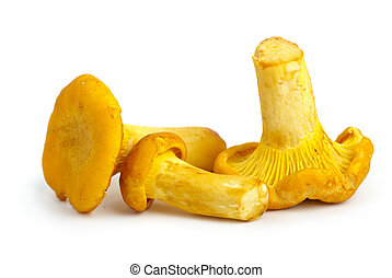 Three chanterelle mushrooms isolated on the white background