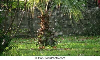 Grass Sprinkler watering - Sprinklers showering lawn