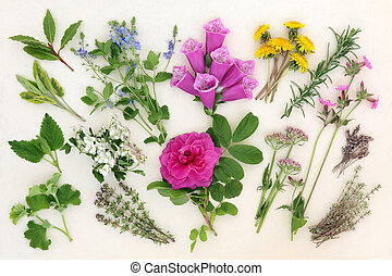 Naturopathic Herbs and Flowers - Herb and flower selection...