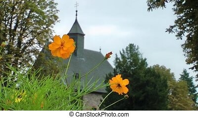 Yellow Daisy Flowers and the Church Building