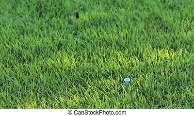 Hand with golf ball - Hand positioning a golf ball over the...