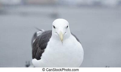 Feeding seagulls CU