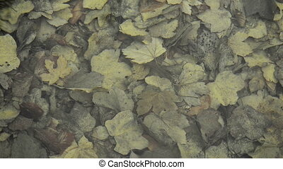 Autumn leaves in water autumn footage