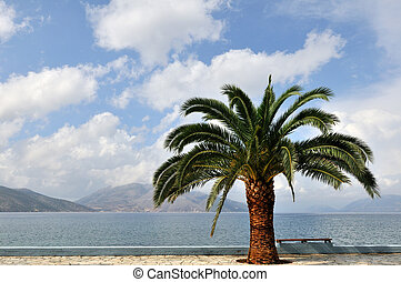 Palmtree at the coast