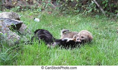 Two puppies playing on grass