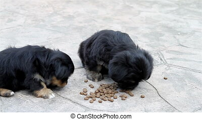 Three puppies eating outside in a yard