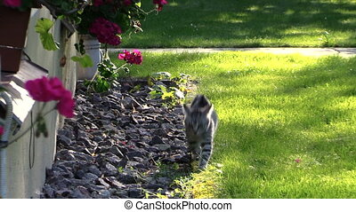 kitten cat flowers - Small kitten cat walk near house window...