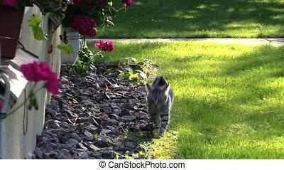 kitten cat flowers - Small kitten cat walk near house window...