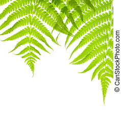 Background with lush fern leaves - Background with two lush...