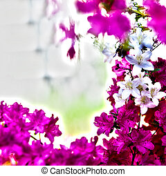 Beautiful Red Violet and White Flowers - Close up Beautiful...