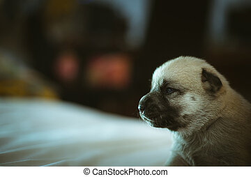 Image of cute little puppy closeup indoor.