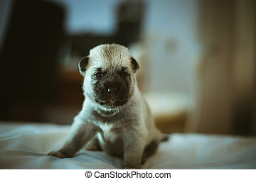 Image of cute little puppy closeup indoor