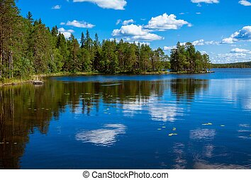 pine forest reflection in the lake