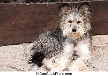 Adorable shaggy dog - Likeable shaggy stray dog on stone...