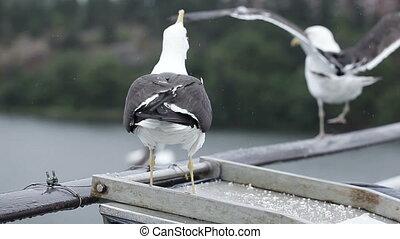 CU. Feeding seagulls