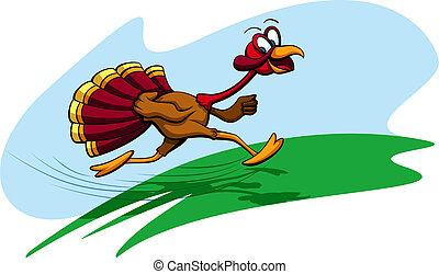 Thanksgiving Turkey Running