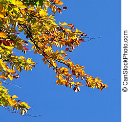 Yellow autumn leaves against blue sky