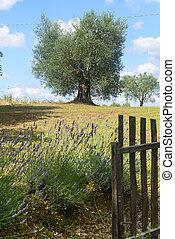 Maremma (Tuscany, Italy) - Country landscape in Maremma...