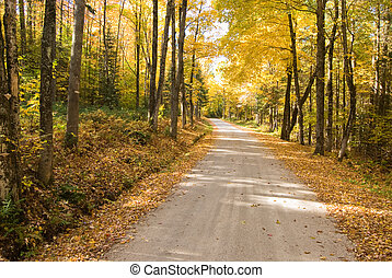 Autumn path winding through the woods - Wide angle image of...