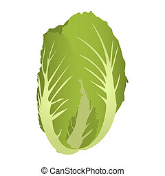 Chard isolated on a white background