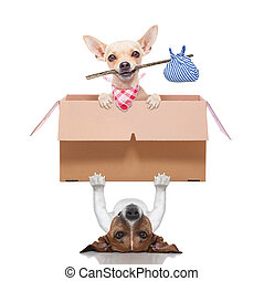 moving box dogs - dog lifting a moving box with a chihuahua...
