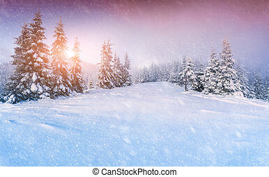 Colorful panorama of the winter sunrise in the mountain...