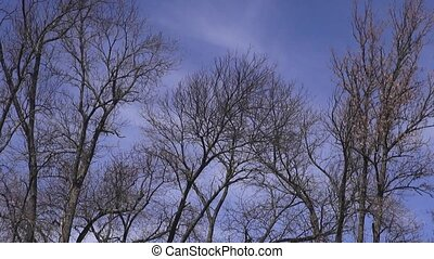 Tree Branches, Leaves, Nature