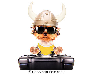 dog dressed up as a viking play on game pad isolated