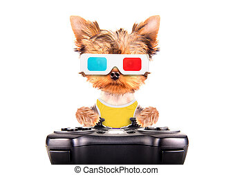 dog play on game pad isolated over white background