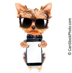 dog wearing a neck bow and shades with phone - cute puppy...