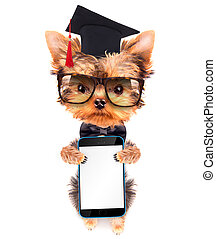 graduated dog with phone - graduated dog holding phone with...