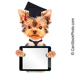 graduated dog with tablet pc