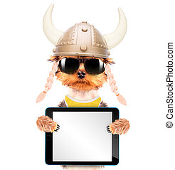 dog dressed up as a viking with tablet pc - dog dressed up...