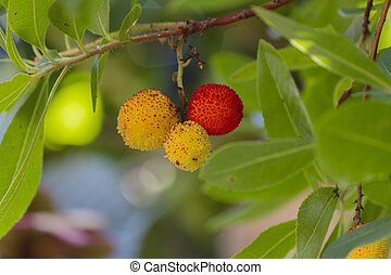 arbutus on tree