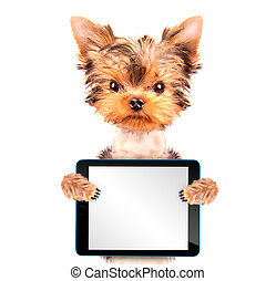 dog holding a  blank tablet pc