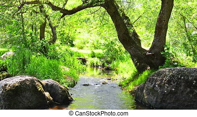 Stream in the tropical forest Environment sunny landscape...