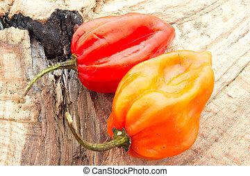 habanero, pimenta
