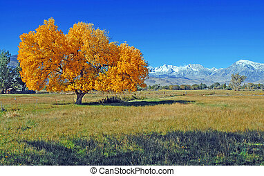 Autumn in the Eastern Sierra - Sierra Nevada Mountains,...