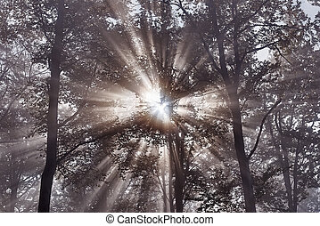 Sun rays -  View of Sun rays in misty beech forest